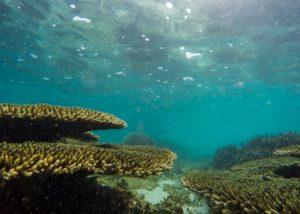 ile-maurice-corail