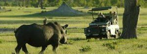 safari-zimbabwe