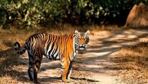 national-park-madhya-pradesh