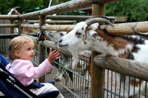 parc-animalier-bretagne